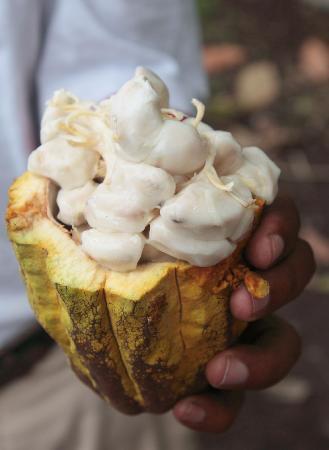 Boucan by Hotel Chocolat: Cocoa Pod