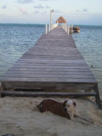 Pelican Reef Villas Resort: Resident pet India at the dock