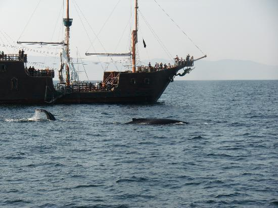 Vallarta Discovery Day Tours : Humpback whale