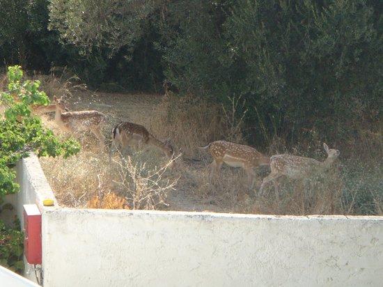 Hotel Solemar: deer!:D♥