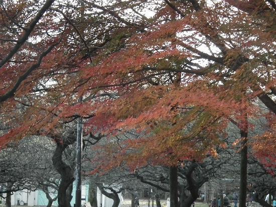Kinuta Park: 砧公園その1