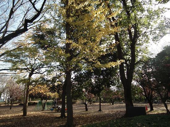 Kinuta Park: 砧公園その2