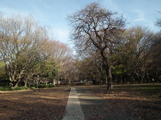 Setagaya, Japón: 砧公園その3