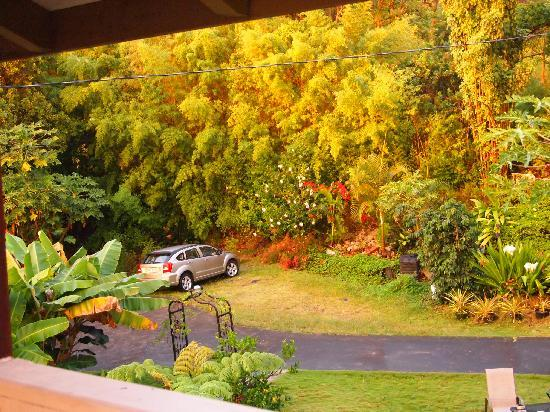 A Beautiful Edge of the World B&B: Parking area at house in lush gardens.