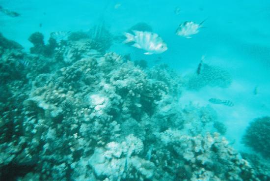 Fiesta Resort & Spa Saipan: マニャガハの海