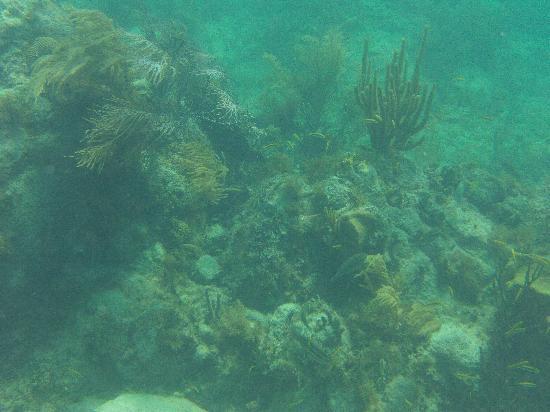 Blue Beach: yet another view underwater