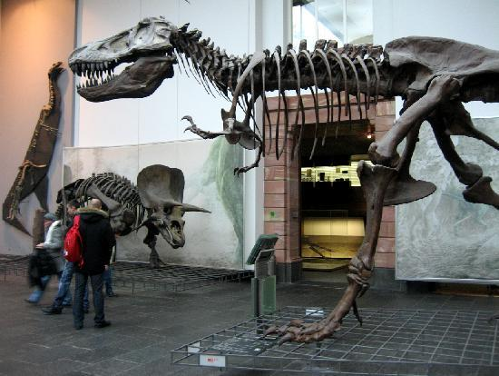 Senckenberg Natural History Museum (Naturmuseum Senckenberg) : Im 1. Lichthof
