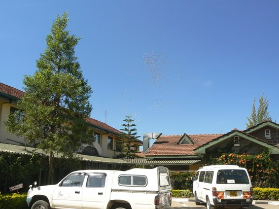 Nakuru, Kenia: Pelicans over Jumuia Guest House