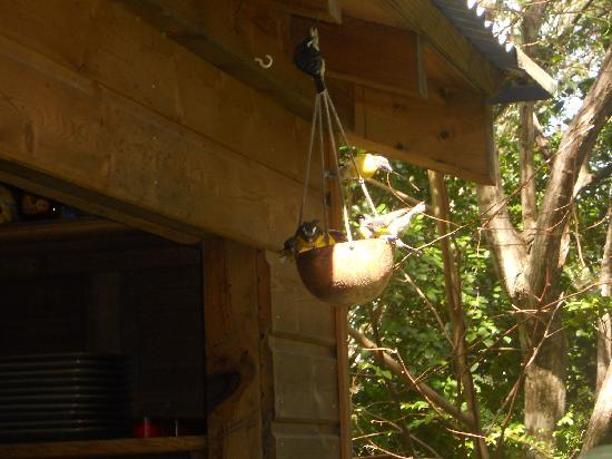 Au Jardin des Colibris: Les sucriers devant la cuisine
