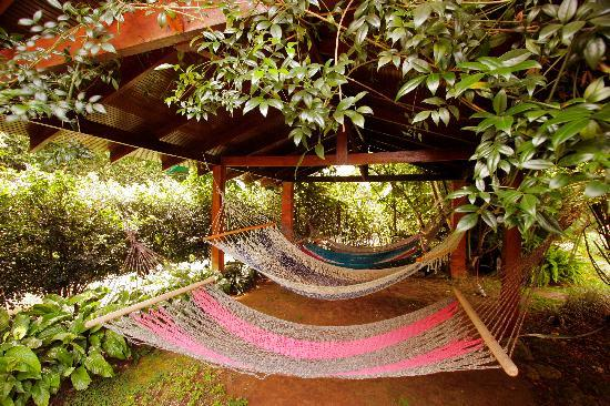 Pura Vida Spa & Yoga Retreat: The Hammock Lounge at Pura Vida Spa Costa Rica