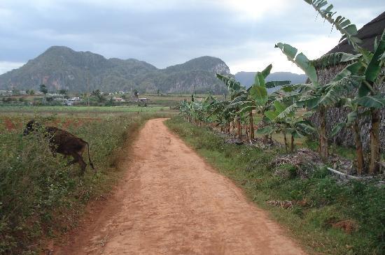 Casa Tamargo: Vinales - les mogotes