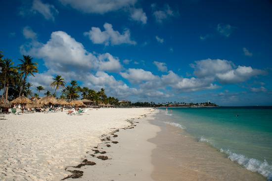 Tamarijn Aruba All Inclusive : Beach at Tamarijn