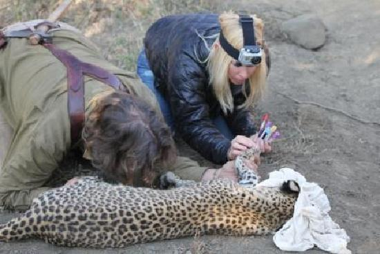 Lydenburg, South Africa: Jenn with Dairen and Leopard