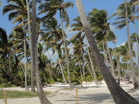 Dreams Palm Beach Punta Cana: playa