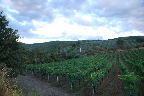 Casa Portagioia: vineyard