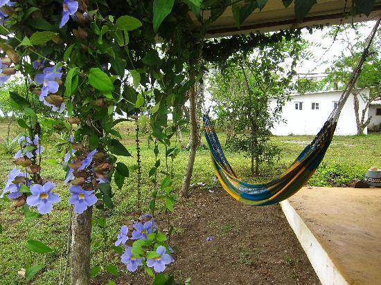 Hotel Hibiscus Garden : blumen, hängematte, chillen....