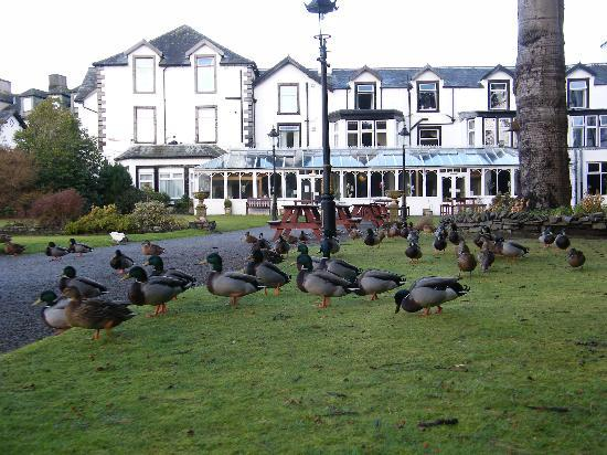 The Derwentwater Hotel: ducks on the lawn