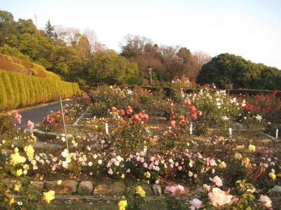 Fukuyama, Japan: 福山市園芸センターのバラ園