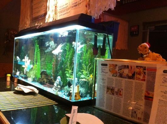 Sushi Shoya: Fish Tank