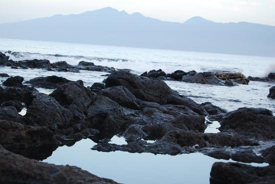 Napili Shores Maui by Outrigger: tide pools and lava bed below the pool