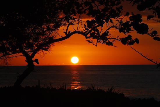 Cocolobo: Sunset