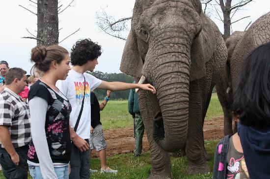 Knysna Elephant Park: Acariciando los elefantes