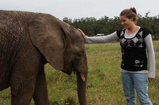 Knysna Elephant Park: Jugando con los Bebes elefantes