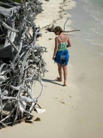Gold Rock Beach: A walk on Gold Rock