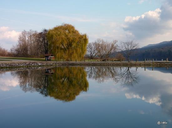 Nature Inn at Bald Eagle: Lonely willow
