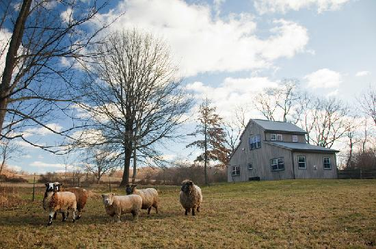 Woolverton Inn: Manor House and Sheep Pasture