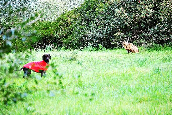 Hotel Terme di Sardara: cane e gatto nel parco