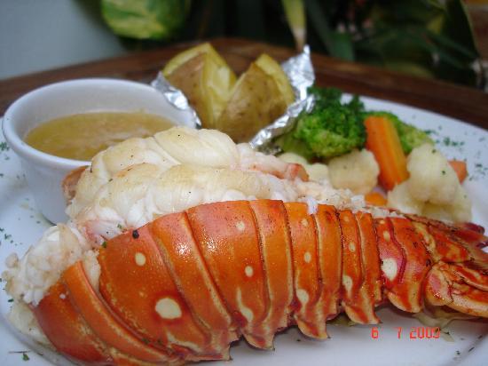 Langosteria Maya Restaurant : CARIBEAN LOBSTER
