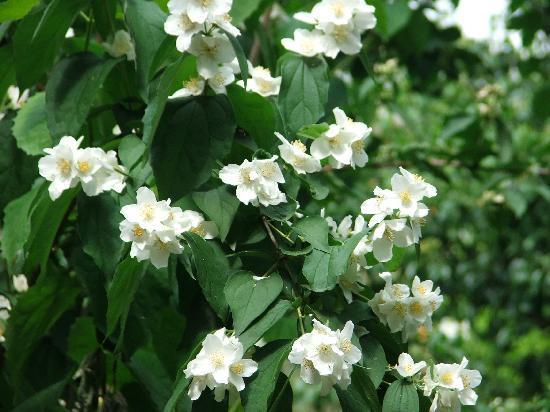 Giardino dei semplici : A tiny japanese garden in florence picture of orto botanico tripadvisor