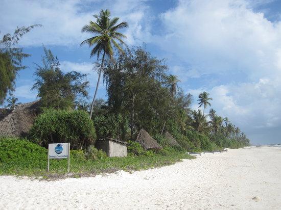 One Ocean: The Zanzibar Dive Center: Walk Down the Beach to Find it