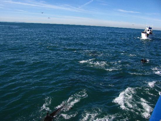 Дана-Пойнт, Калифорния: Delfines en Dana Point
