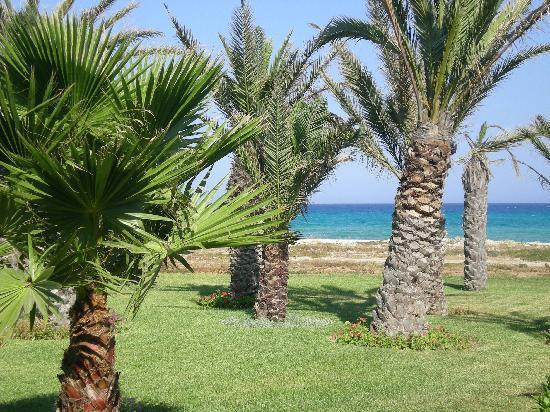 Korba, Tunisie : scorcio del giargino
