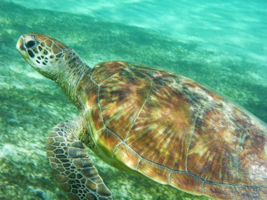 Arajilla Retreat - Lord Howe Island: Turtle
