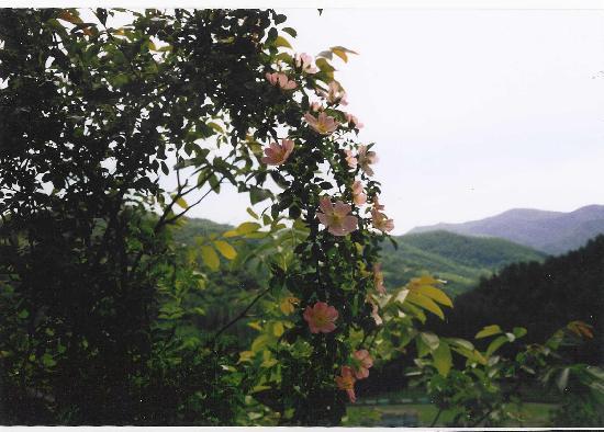 B&B Sartoni Flavio: esemplaredi una delle numerose rose canine