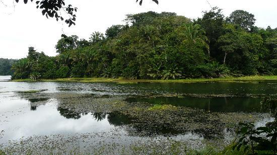 Panama Rainforest Discovery Center: The Lake