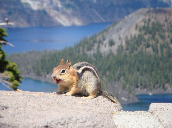 Crater Lake National Park: Chippy