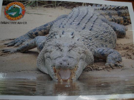 Bruce Belcher's Daintree River Cruises: Krokodil auf dem Prospekt im Shop