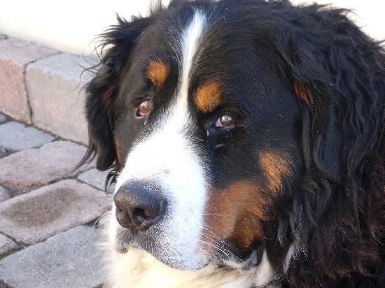 Panorama Hotel Taljoergele: Gino: il buonissimo cane dell'hotel