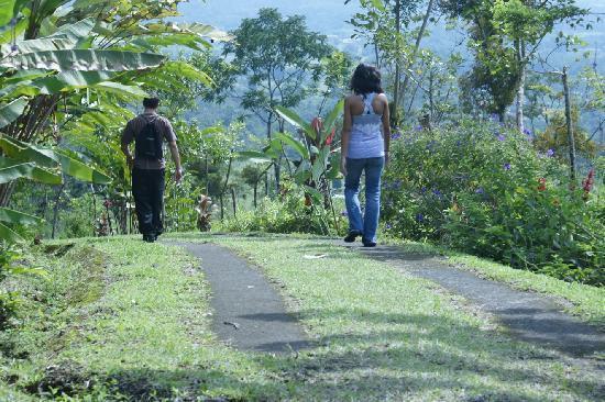 GreenLagoon Arenal Waterfall Villas: Trails at the Lodge