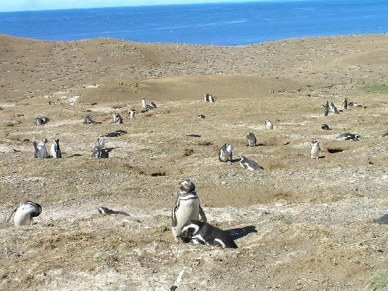 Punta Arenas, Chile: Die Insel der Pinguine