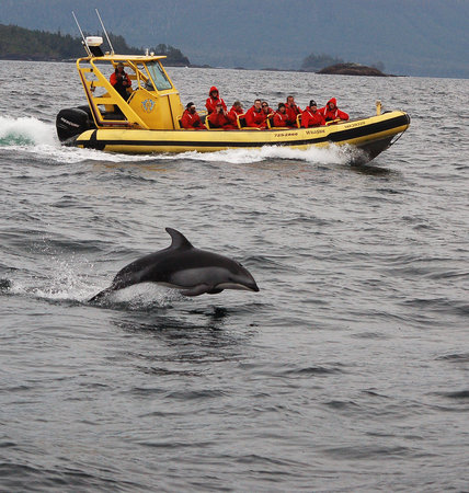 Ocean Outfitters : Clayoquot Sound Wildlife