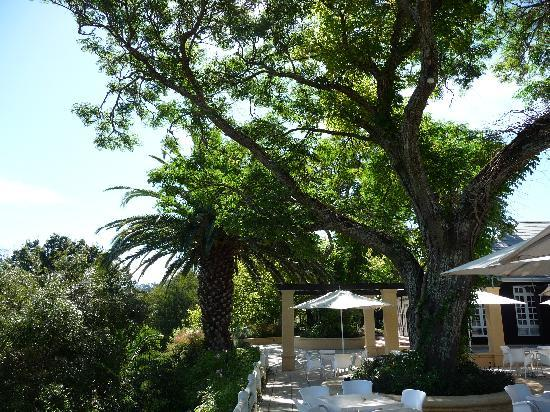 Devon Valley Hotel: The Vineyard Terrace - the perfect place for lunch!