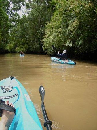 Kayak a Pedal en el Delta