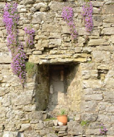 Terryglass, Ireland: Very Old Wall