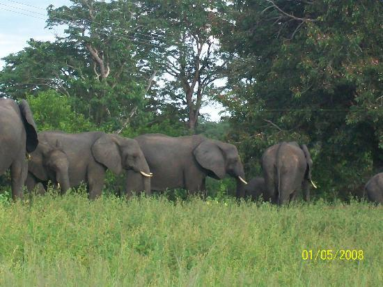 Victoriawatervallen, Zimbabwe: Elephant encounter in Botswana