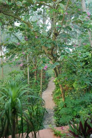 Paradise Gardens Beach Resort & Ayurveda : Path from the house to the beach